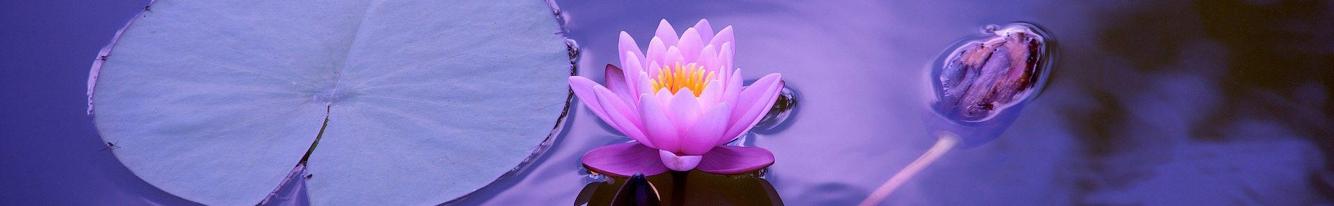 Canada Yoga Vedanta Org
